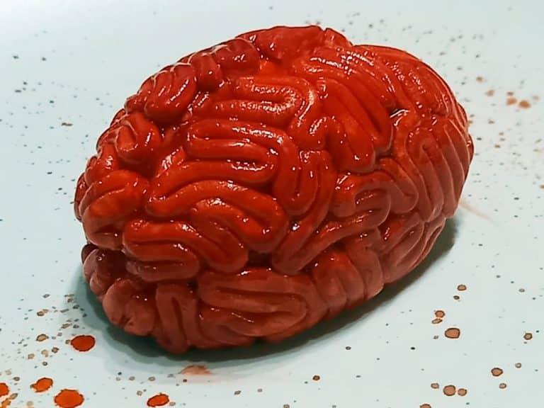 Comment modeler un cerveau ?